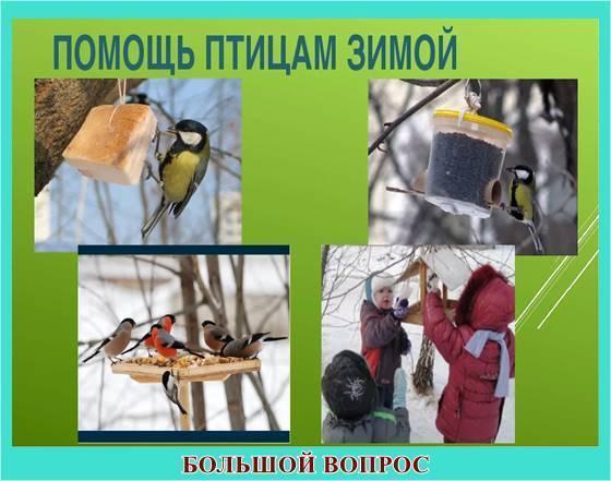 Доклад сообщение Перелетные птицы