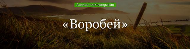 Анализ стихотворения Воробей Тургенева 7 класс