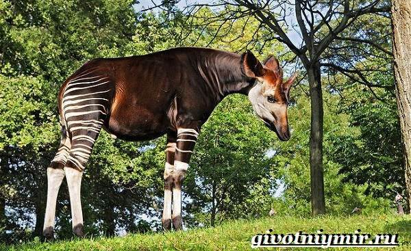 Доклад на тему Животные тропических лесов сообщение