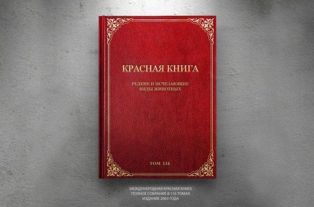 Сообщение Ландыш майский (красная книга 3 класс окружающий мир)