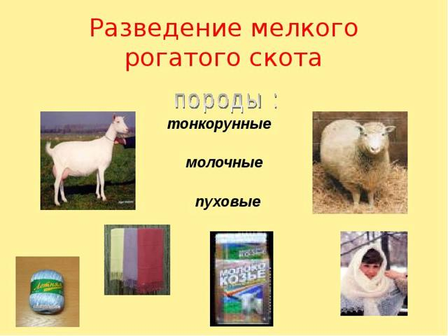 Животноводство - доклад сообщение (3, 4, 9 класс окружающий мир)