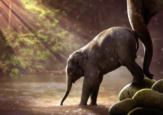 Какое значение вода имеет для растений животных человека?