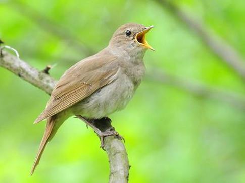 Птицы - сообщение доклад