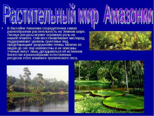 Река Амазонка - сообщение доклад (4, 7 класс кратко)