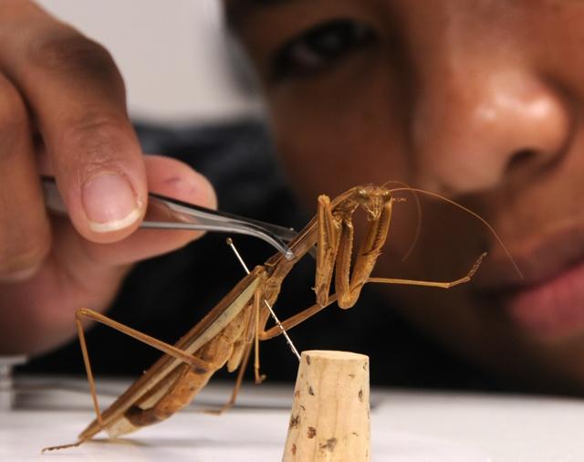Кто такой энтомолог и что изучает? (энтомолог это профессия изучает) 2 класс