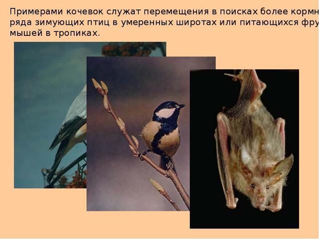 Миграция животных - сообщение доклад