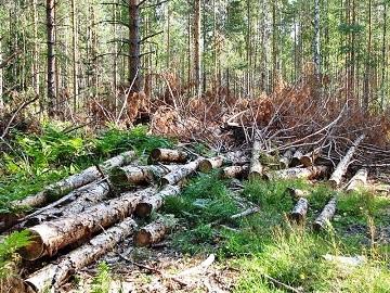 Экологические проблемы России - сообщение доклад