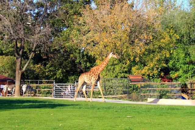 Московский зоопарк - сообщение доклад