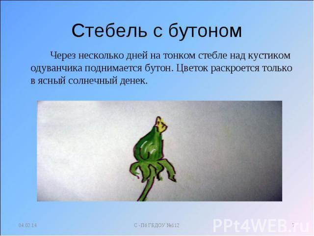 Доклад на тему Одуванчик 2, 3, 4 класс сообщение