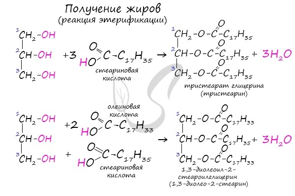 Жиры - доклад сообщение по химии
