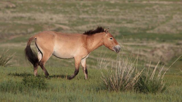 Лошадь - сообщение доклад