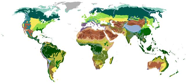Тайга - сообщение доклад (4, 8 класс. Окружающий мир. География)