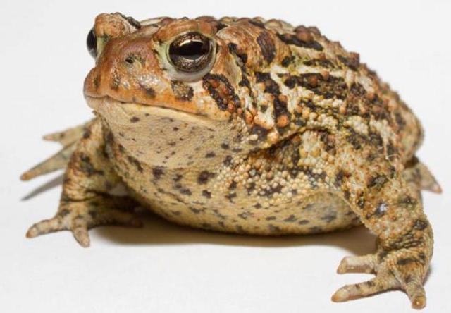 Сказка о жабе и розе - краткое содержание (Гаршин)