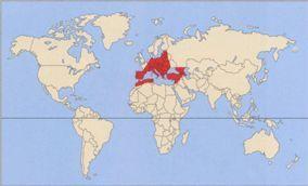 Коршун - сообщение доклад (2, 3, 7 класс окружающий мир)