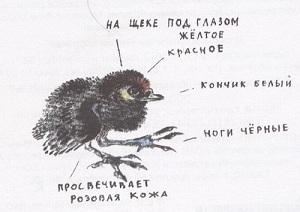 Никита и его друзья - краткое содержание рассказа Чарушина