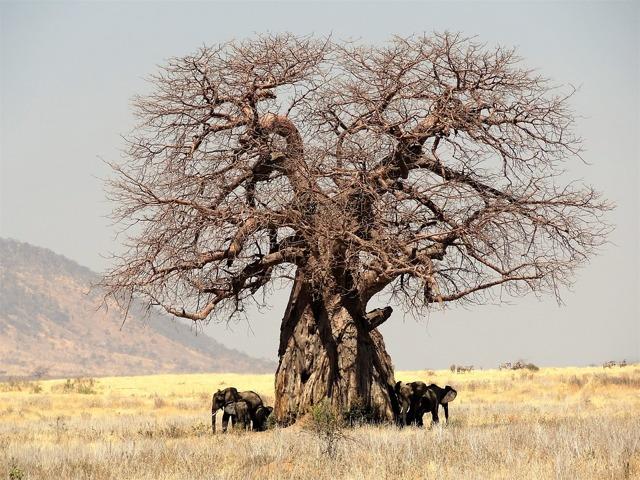Доклад на тему Растения пустыни