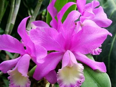 Цветы - доклад сообщение