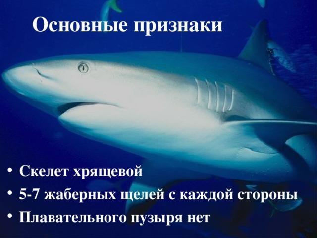 Хрящевые рыбы - 7 класс биология сообщение доклад