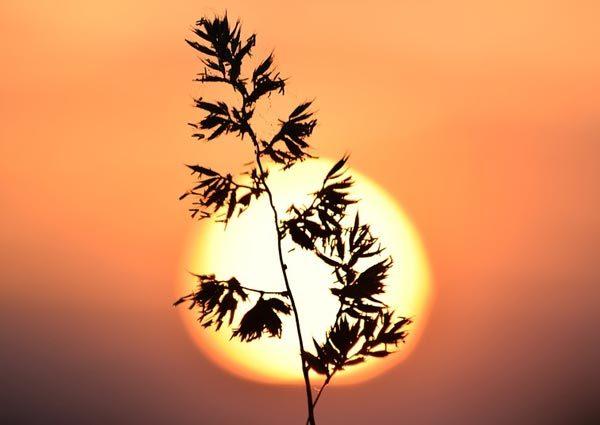 Анализ стихотворения Будем как солнце Бальмонта