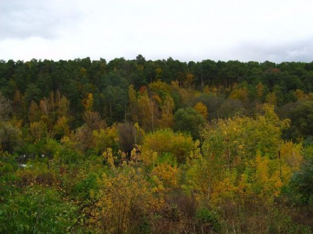 Жизнь леса - сообщение доклад (2, 4 класс окружающий мир)
