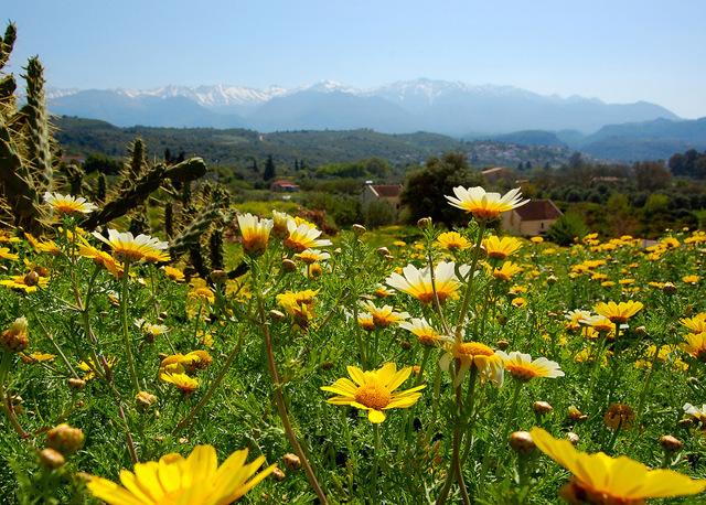 Охрана растений - сообщение доклад