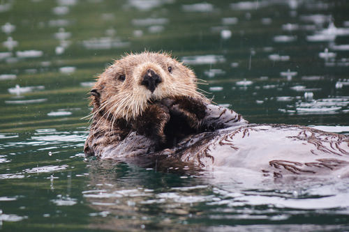 Животные океана - сообщение доклад