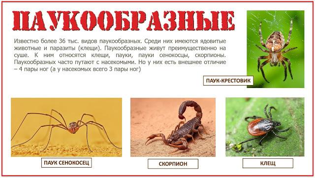 Позвоночные животные сообщение доклад (3, 5 класс окружающий мир)