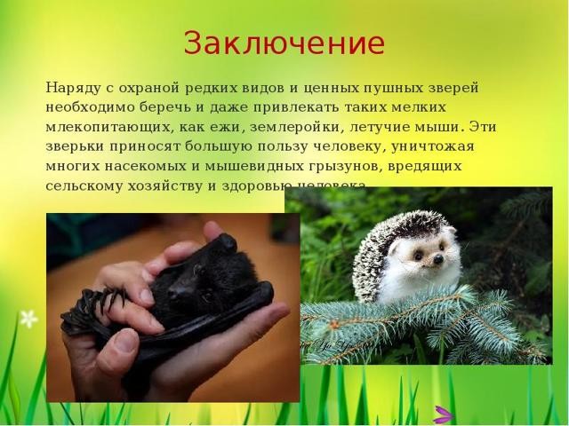Охрана млекопитающих - сообщение доклад
