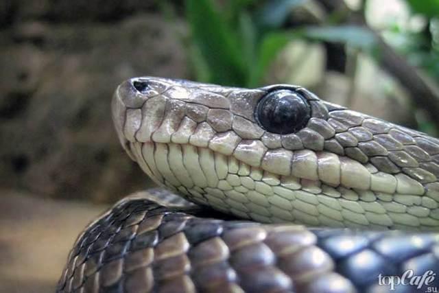 Змеи сообщение доклад (3, 7 класс Окружающий мир Биология)