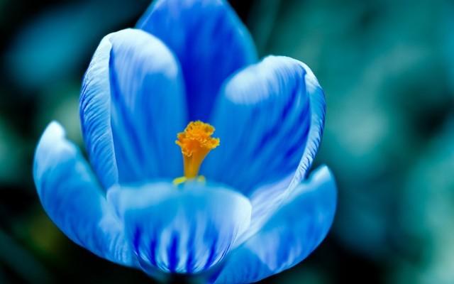 Как вы понимаете устойчивое словосочетание «голубая мечта»? Итоговое сочинение