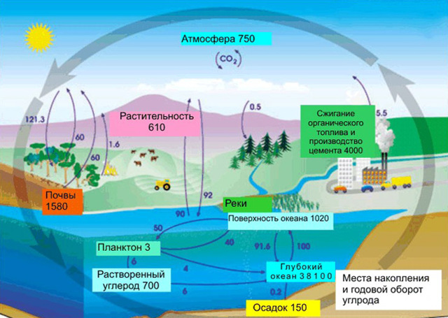 Углерод - сообщение доклад