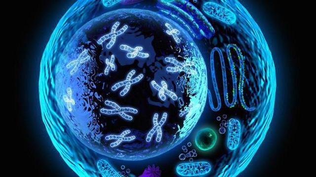Теодор Шванн вклад в биологию (и что открыл)