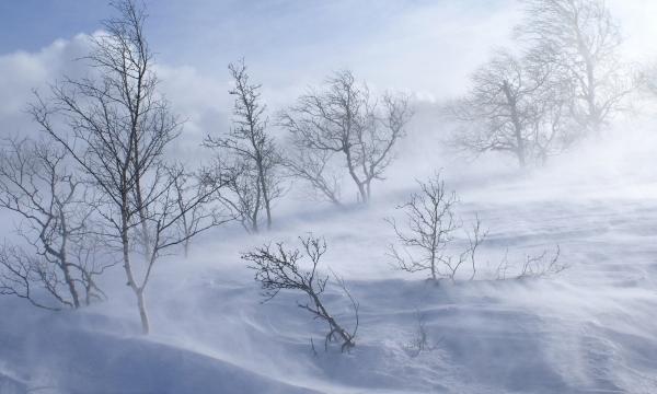 Зима - сообщение доклад (2, 3, 4, 5 класс окружающий мир)