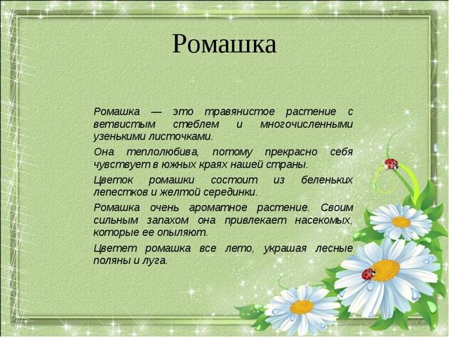 Доклад про Ромашки (сообщение 2, 3 класс окружающий мир)
