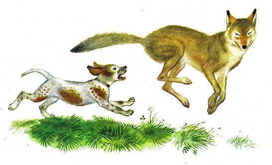Краткое содержание Рассказы о животных Сетон-Томпсон