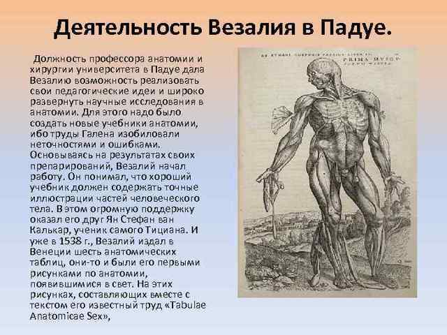 Андреас Везалий вклад в биологию