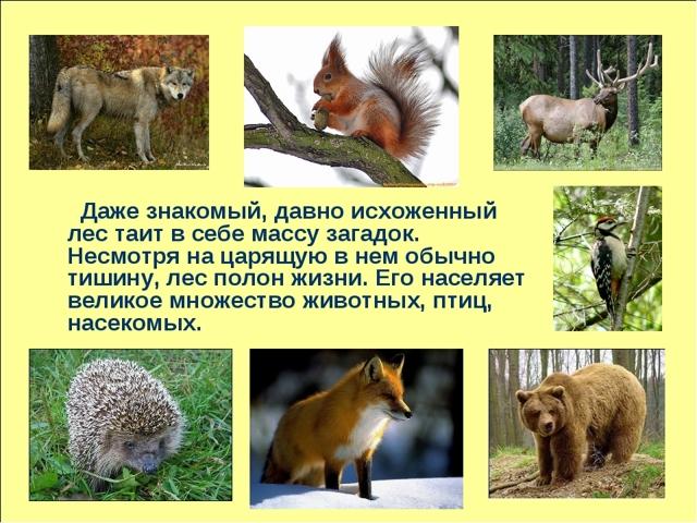 Животные леса - доклад (2, 3, 4 класс окружающий мир)
