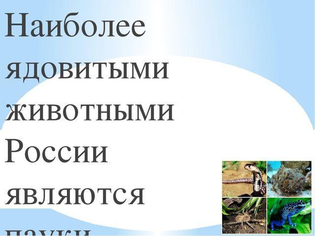 Ядовитые животные России - доклад сообщение (4 класс окружающий мир)